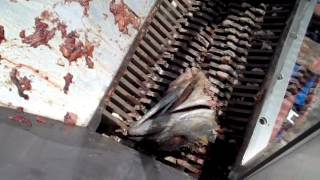 Fish Waste Grinding - Chum
