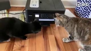 Funny cats :What is this ?? It really scared these two curious cats 🤣🤣