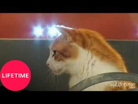 Hollywood Tails Kitties Parody Clic Thelma And Louise Scene Lifetime