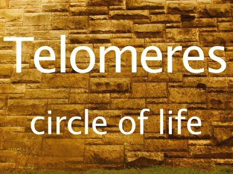 Telomeres  and The Circle of Life