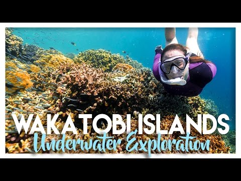 DIVING WANGI IN THE WAKATOBI ISLANDS
