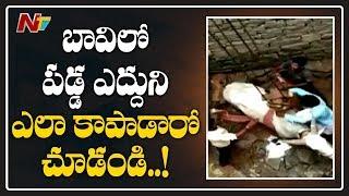 బావిలో పడ్డ  ఎద్దు..! | Ox Falls Into Well At Narayanpet District | NTV