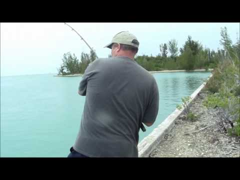 Tarpon and Shark fishing Grand Bahama