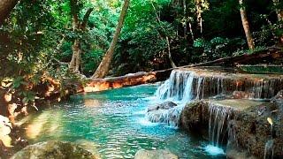Rainforest Sounds Water Sound Nature Meditation