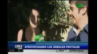 Buscando y utilizando los árboles frutales públicos de la ciudad (360 TV)