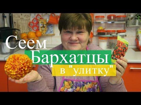 """Сеем бархатцы в """"улитку"""". Просто и эффективно.  (07.03.2016 г.)."""