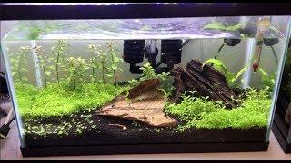 How to: Simple Shrimp Tank Setup