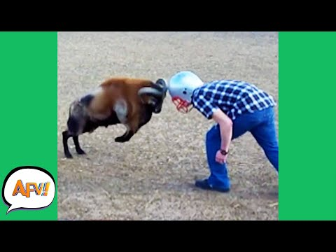 Play this video Talk About A HARD-HEADED FAIL! р  Funny Videos AFV 2020