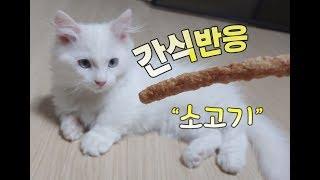 고양이 간식먹기 Snack eating cat  猫のおやつを食べる 고양이 반응이 궁금해요
