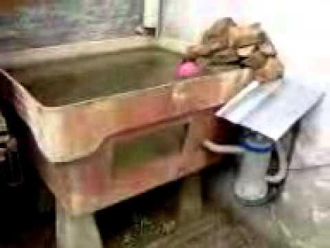 Cria o de tilapia em casa for Criar mojarras en casa