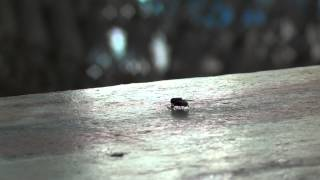 Eega - Telugu Movie Eega Official Theatrical HD Trailer | Eega Movie Trailer | SS Rajamouli Eega Trailer HD
