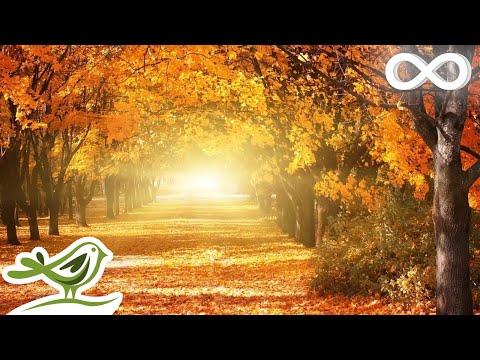 Beautiful Relaxing Music: Romantic Music, Piano Music, Violin Music, Cello Music, Sleep Music ★93