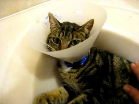 """Variously known as the """"E-collar"""" (short for """"Elizabethan collar""""), the """"lampshade,"""" the """"satellite dish"""" and """"that ungodly torture device that goes around her neck,"""" the ubiquitous plastic cone is by far the most common solution to the problem of postoperative incision complications and other areas in need of self-trauma avoidance."""