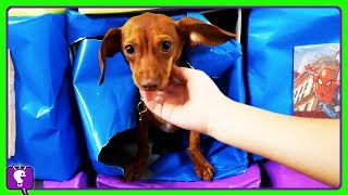 SURPRISE BOXES!! Puppy + Incredibles Toy with HobbyHeroes and Golden Tickets Surprises