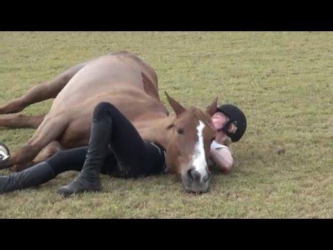 ご主人に甘えて上にかぶさり芝生で寝そべる馬
