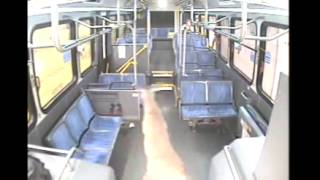 Deer vs  Bus