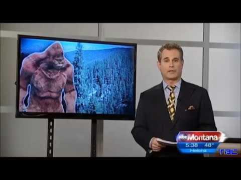 Bigfoot Captured In Yellowstone National Park - Fox Montana
