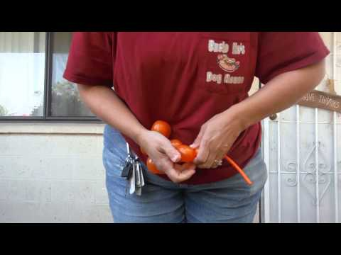 Water Balloon Twisting A Dog