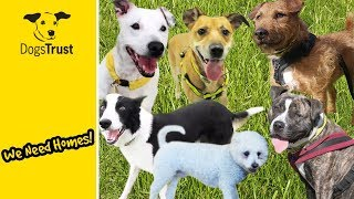 Our Dogs of the Week | Can You Give Them a Home? | Dogs Trust