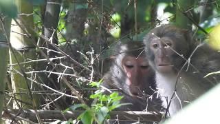 The animals-monkeys  2018/6/25 08:54