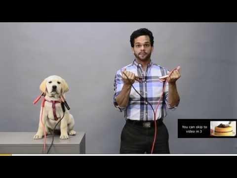 Puppy Pre-roll Case Study