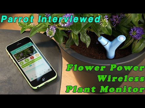 Parrot Interviewed - Flower Power Wireless Plant Monitor