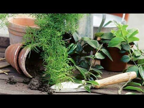 Весенняя пересадка комнатных растений. GuberniaTV