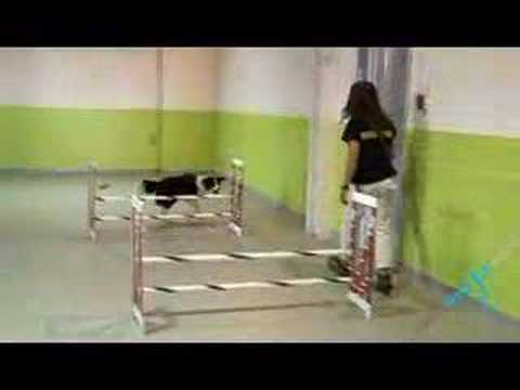 Pet Care - Dog Hotels Video