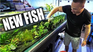 MEET THE NEW FISH!!! | The King of DIY