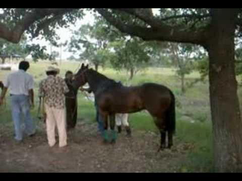 Carreras de caballos en Chinameca Veracruz