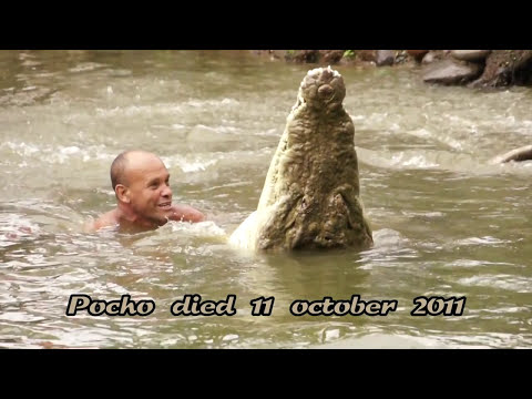 Costa Rica, The Famous Costa Rica Crocodile Pocho died 11 october 2011 in Siquirres