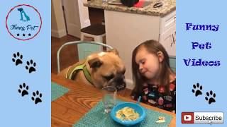 Funny Dog Videos for Kids ✅ Funny and Cute Dog Videos For Kids Compilation video HD ##02