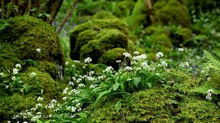 Life Sounds Nature