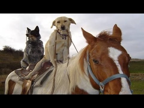 Funny Horse Videos March 2014