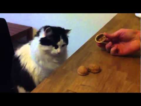 Questo gatto è più intelligente del Trota