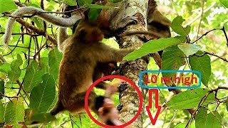 Million sad,poor baby Maddix falls down from 10 meters high tree by lose consciousness,