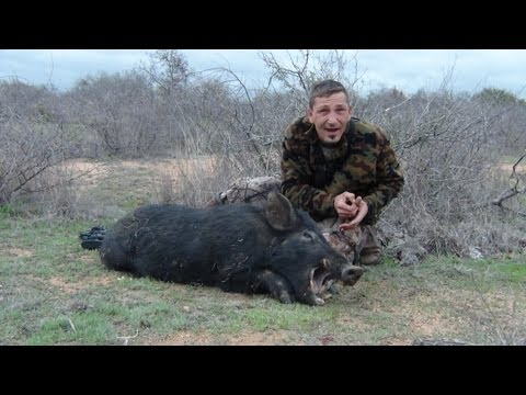 Feral Hog Hunting, Big Boar Down