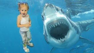 Видео Влог Океанариум. Настя первый раз увидела АКУЛУ. Дрессированная РЫБА