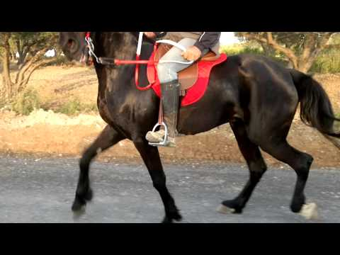 aravani alogo-αραβανι αλογο πολυ γρηγορο!!!!!!!!!!!!