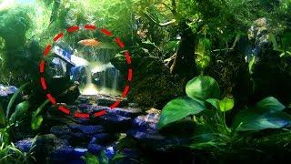 Indahnya air terjun dalam aquarium air tawar | Underwater waterfall