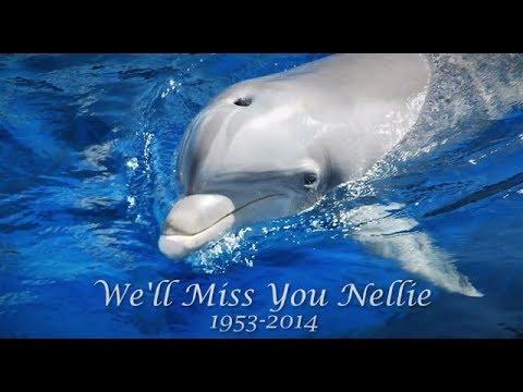 Celebrating Nellie's Legacy