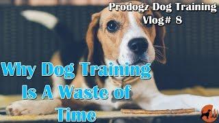 Prodogz Dog Training Vlog #8: Why Training Your Dog Is A Waste Of Time