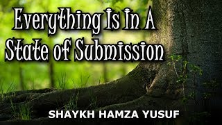 Video: Everything in the World is in a state of Submission to God - Hamza Yusuf