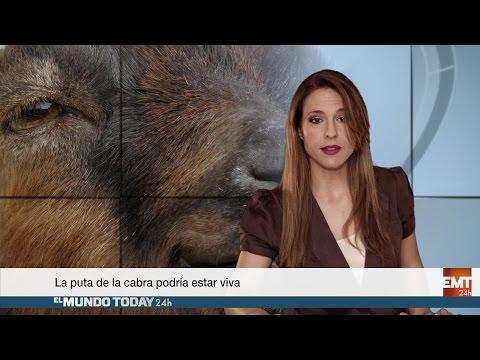 La puta de la cabra podría estar viva - El Mundo Today 24H