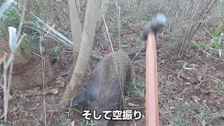 【イノシシ狩猟番組】鈍器が折れる