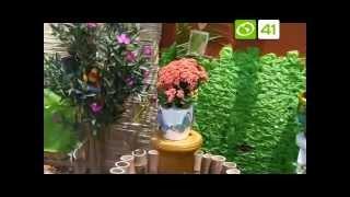 CONCURSO DE PLANTAS ORNAMENTALES - ECORREPORTEROS