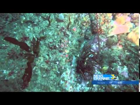New underwater video of reef near site of Refugio oil spill