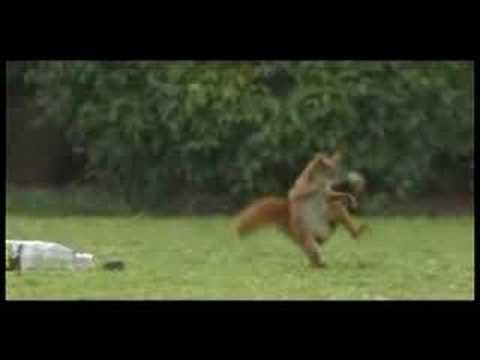 Funny Squirrel Sports Drink Commercial video