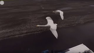 360° Flying With Swans - BBC Earth Unplugged