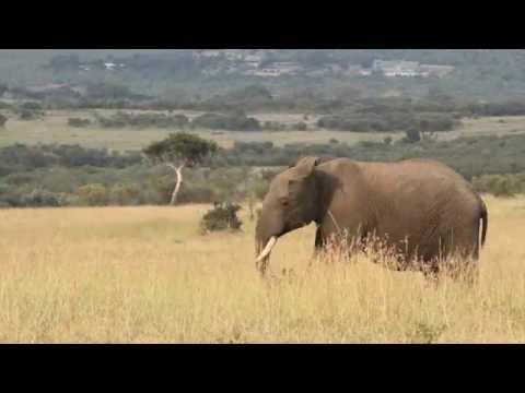 See Elephants in their Natural Habitat in Kenya